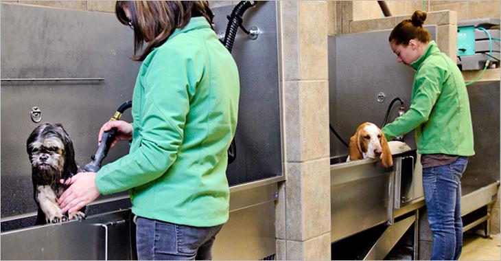 Purrn Pooch Pet Resorts Luxury Cat Boarding Daycare