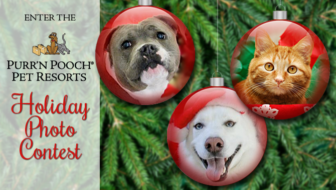 Purr'n Pooch Holiday Pet Photo Contest