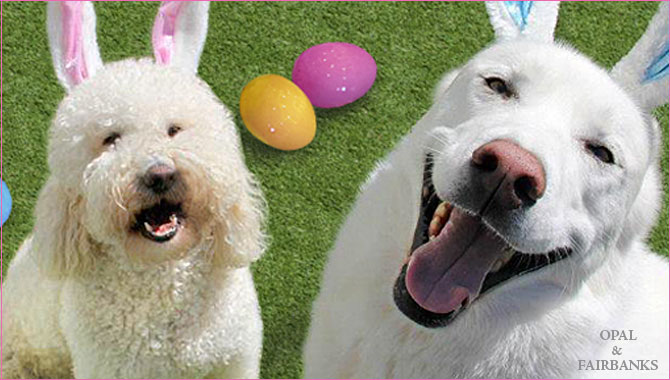 Fun Blooms at Purr'n Pooch Pet Resorts This Spring