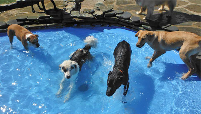 Pets Enjoy the Dog Days of Summer at Purr'n Pooch!