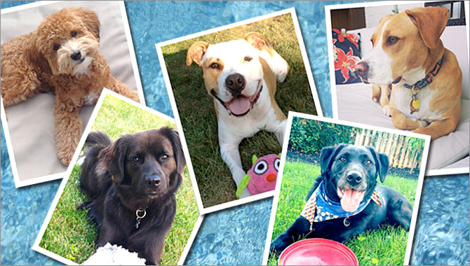 Purr'n Pooch Pet Resorts | Fun in the Sun with Your Pets in
