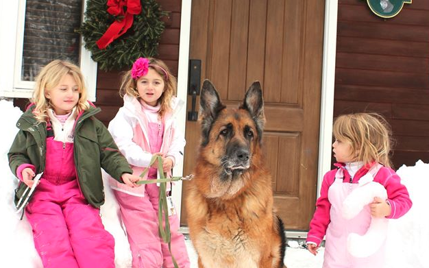 10 Ways to Prepare for a New Pet Over the Holidays