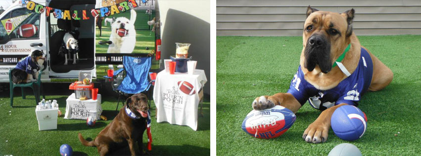 Puppy Bowl at Purr'n Pooch Pet Resorts