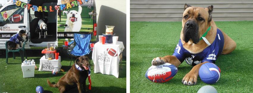 Puppy Bowl at Purr'n Pooch Pet Resorts