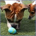 PNP-CC-April-Egg-Hunt