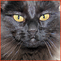 PNP-CC-October-Inset-Black-Cat