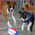 PNP-CC-February-Inset-Puppy-Bowl
