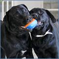 pnp-cc-january-puppy-bowl