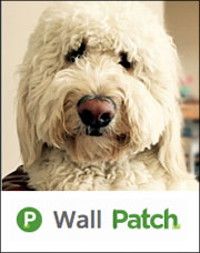 Purr'n Pooch Pet Resorts Has Oodles of Doodles