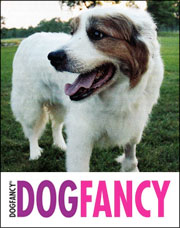 Dog Fancy Article