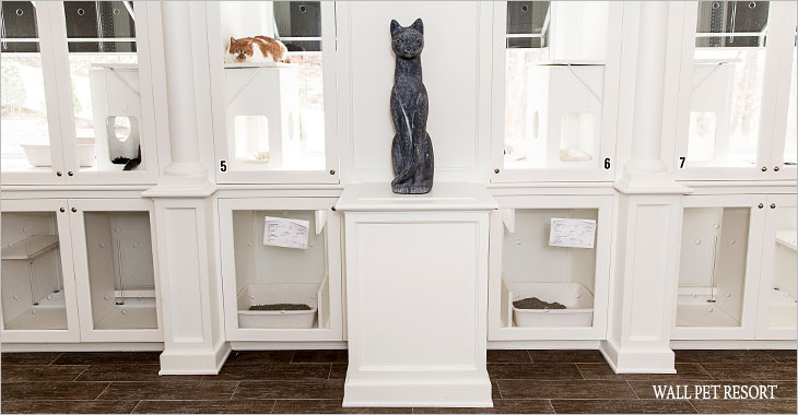 Wall-Cattery