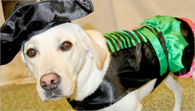 Halloween Pet Safety - Tips from Purr'n Pooch