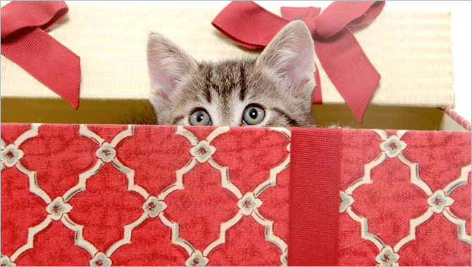 Pet Safety During the Holidays -Tips from Purr'n Pooch