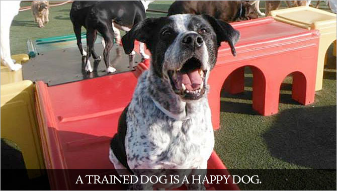 7 Tips for a Positive and Successful Dog Training Experience