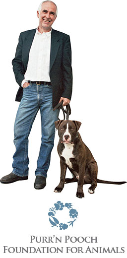 Solutions for Common Dog Behavior & Training Problems