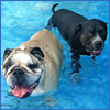 Celebrate Summer at Purr'n Pooch Pet Resorts