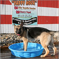 Summer Fun at Purr'n Pooch and Dog-Friendly Events at the Jersey Shore