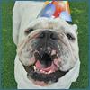 PNP-CC-Sep-Inset-Birthday-2