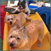 PNP-CC-Sep-Inset-Dog-Week