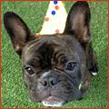 PNP-November-CC-Birthdays
