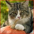 PNP-November-CC-Thanksgiving