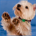 PNP-CC-January-Spa-Special-Paw