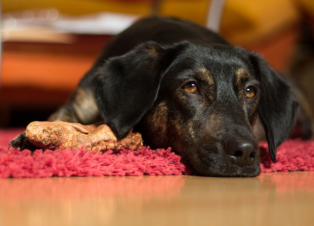 Betsy's Law should be amended to require 24-hour supervision at all animal care facilities