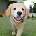 PNP-CC-March-Inset-Puppy