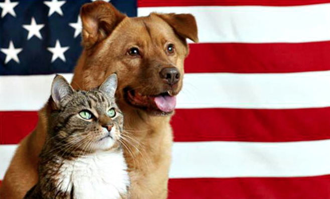 pets and fireworks