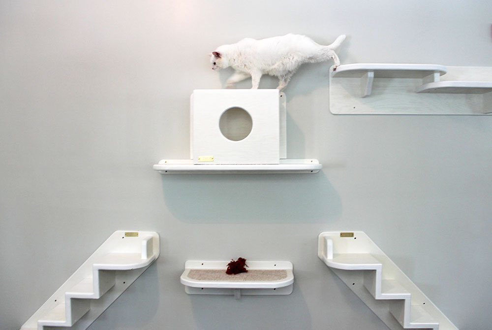 Cat_Accommodations_3